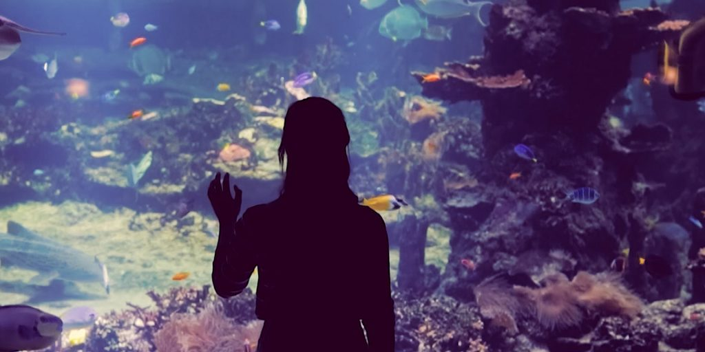 linneanjuttugirl-at-aquarium-centre-1920x1080