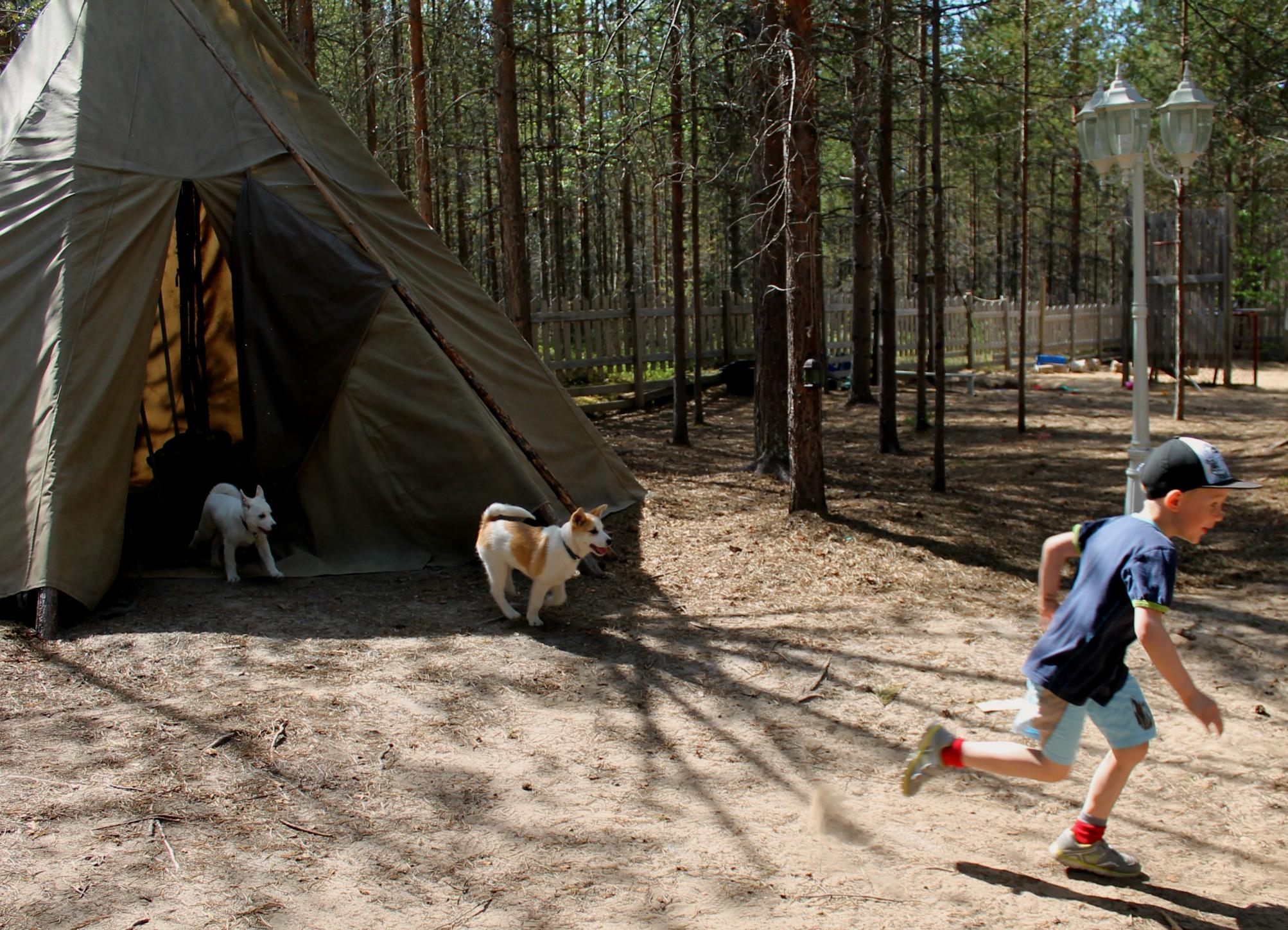 koirat, kuva Kaisu Pöysö